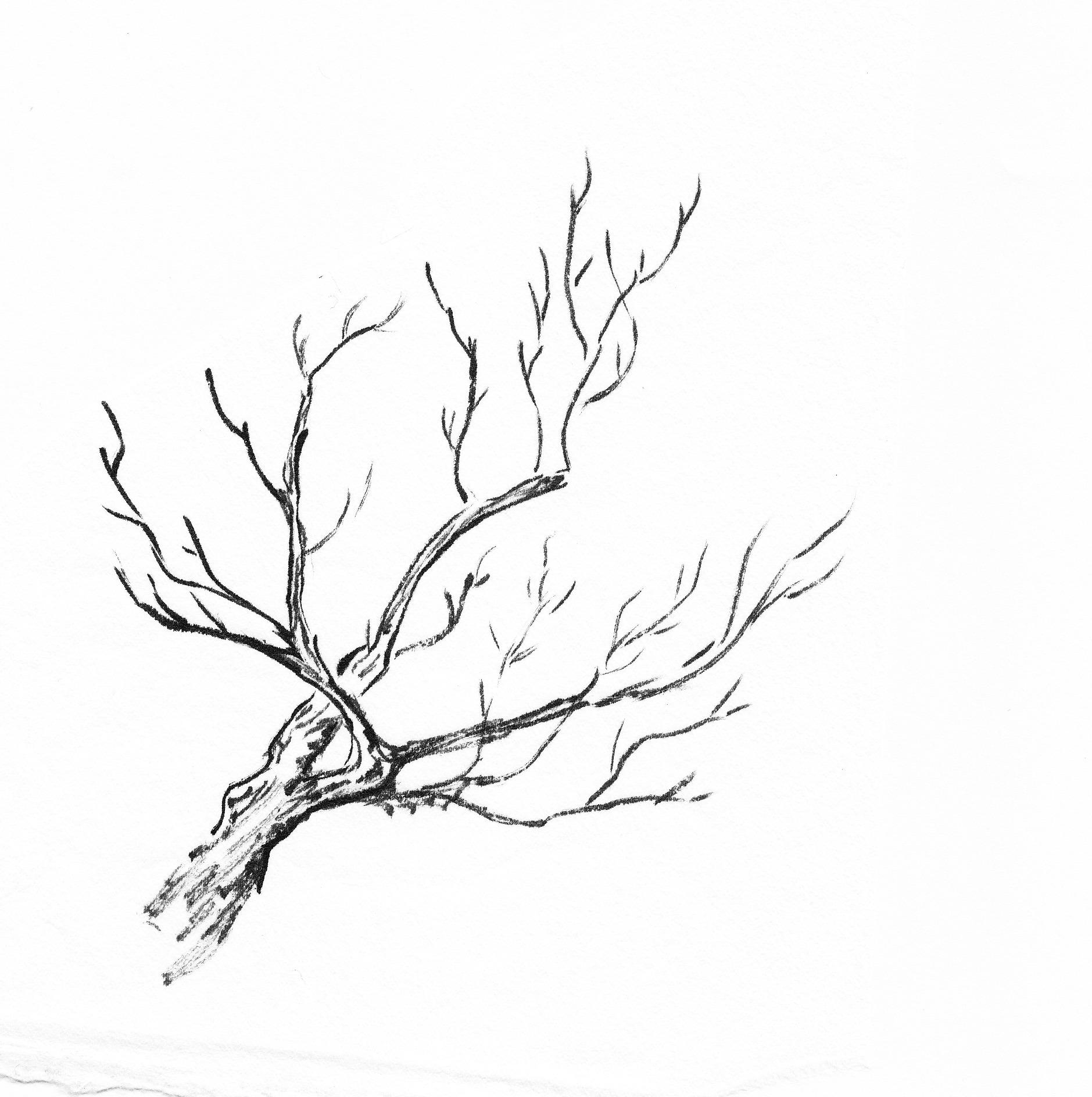 Treebranchestwist