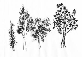 Tree+tienpractice1