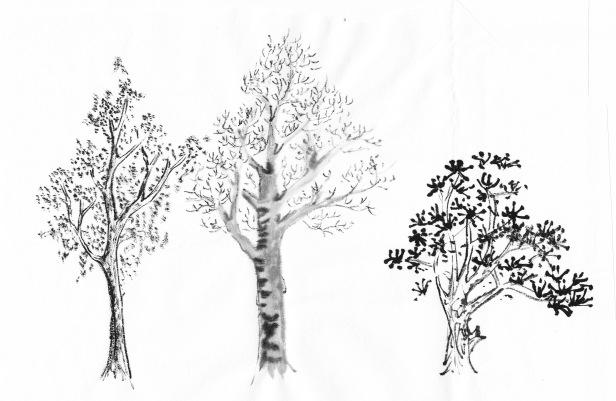Tree+tienpractice2
