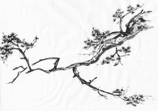 Tree=whitepine