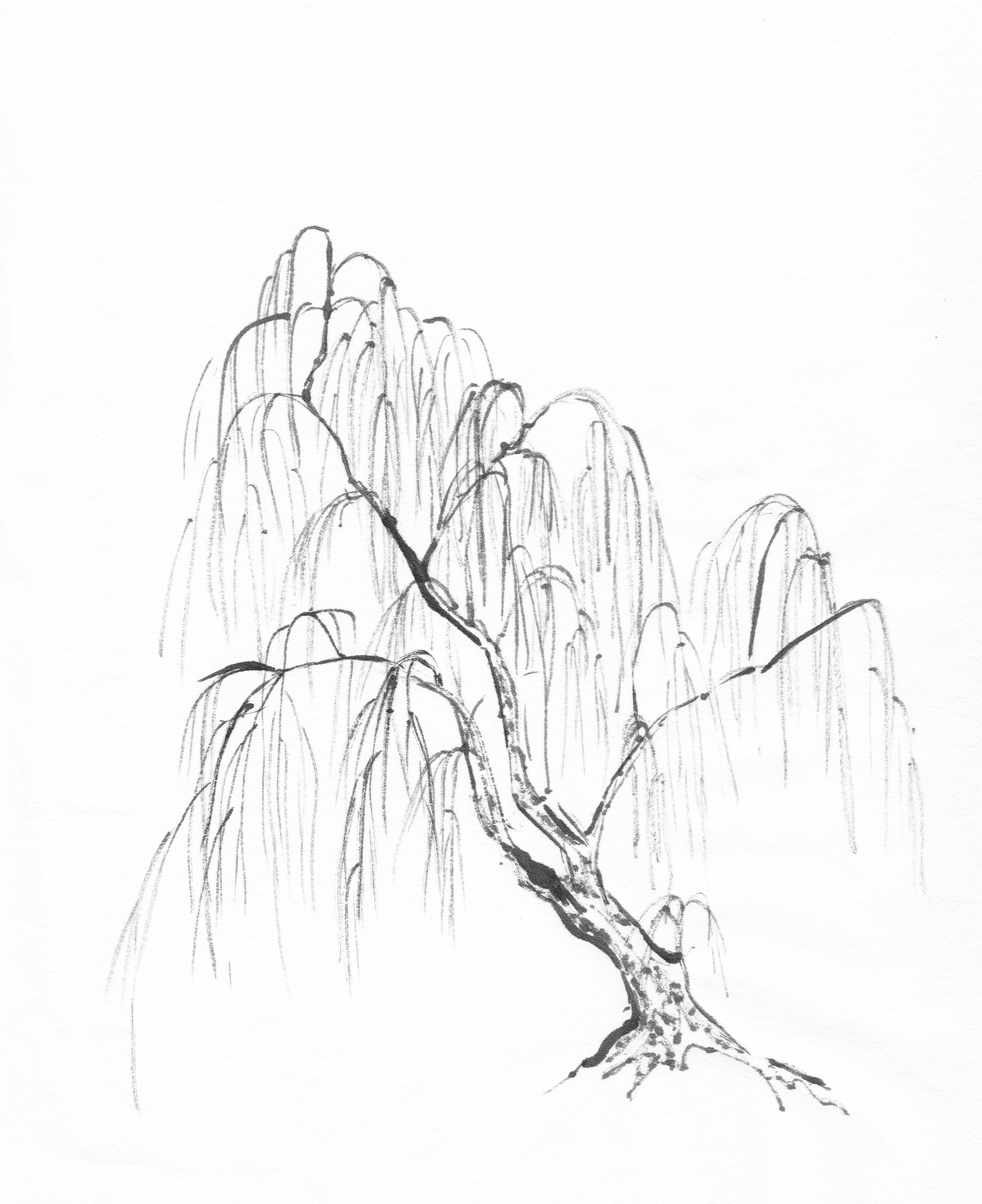 Uncategorized How To Draw A Weeping Willow specific trees painting willow followmybrushmarks tree leavesfoliage