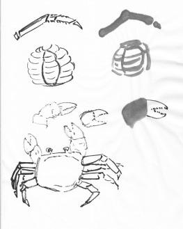 CrabStudy1