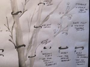 Nodes&Branches