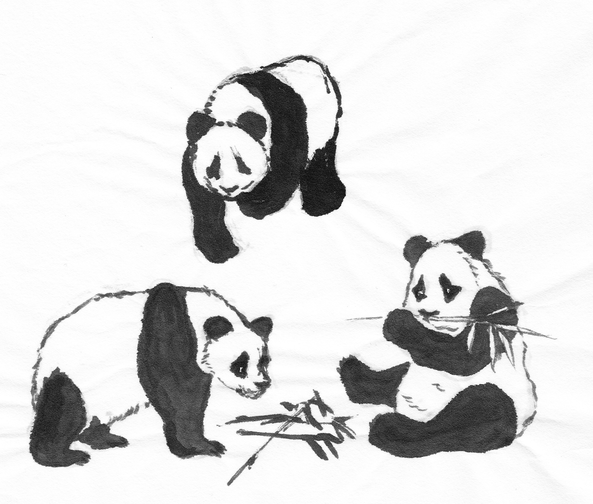 Download Wallpaper Home Screen Panda - pandasthree  Perfect Image Reference_457442.jpg