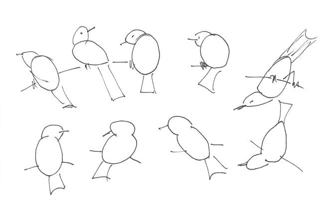 BirdShapes