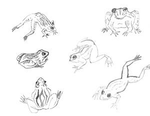FrogOutlines