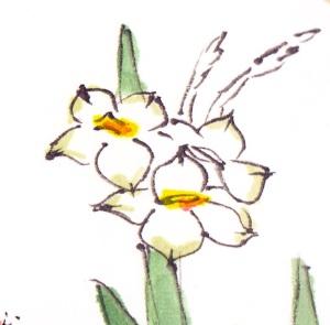 NarcissusPetalCU