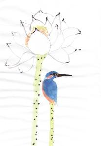 kingfisherstudy