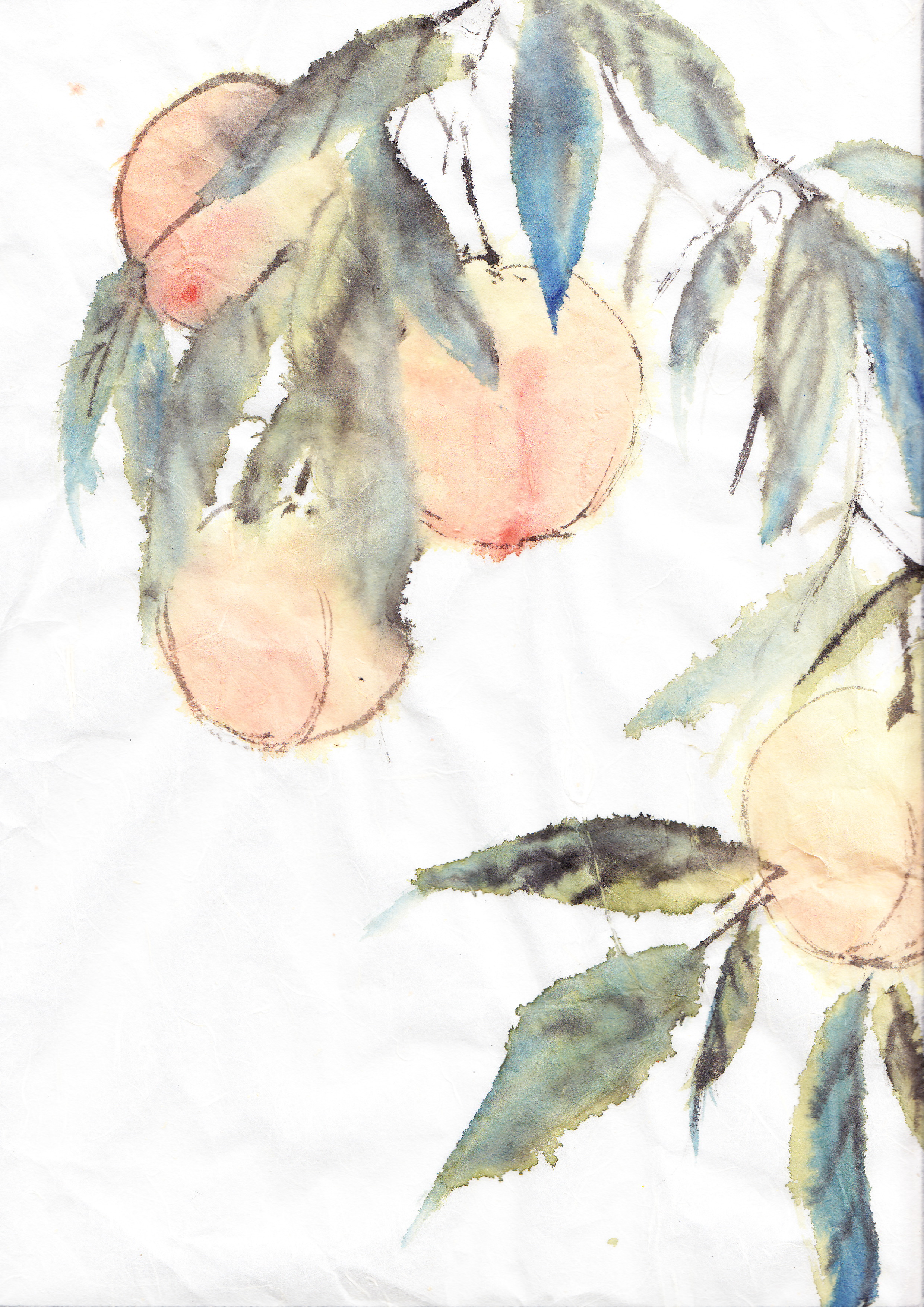 Followmybrushmarks exploring the ancient art of chinese brush my first study following chows instructions for painting peaches in a tree buycottarizona Image collections
