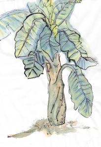 BananaPlant