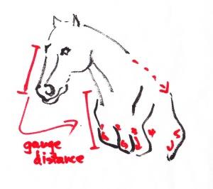 HorseBodyVis2