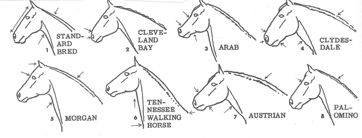 HorseHeadsVary