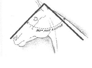 HorseholdsHead