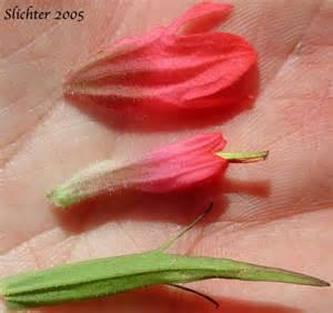 IPBflowerparts