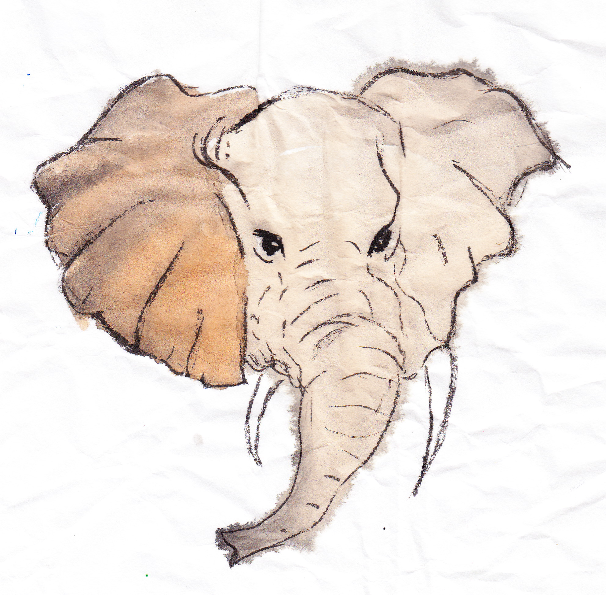 The return of ernest the elephant followmybrushmarks elephantsst biocorpaavc Image collections