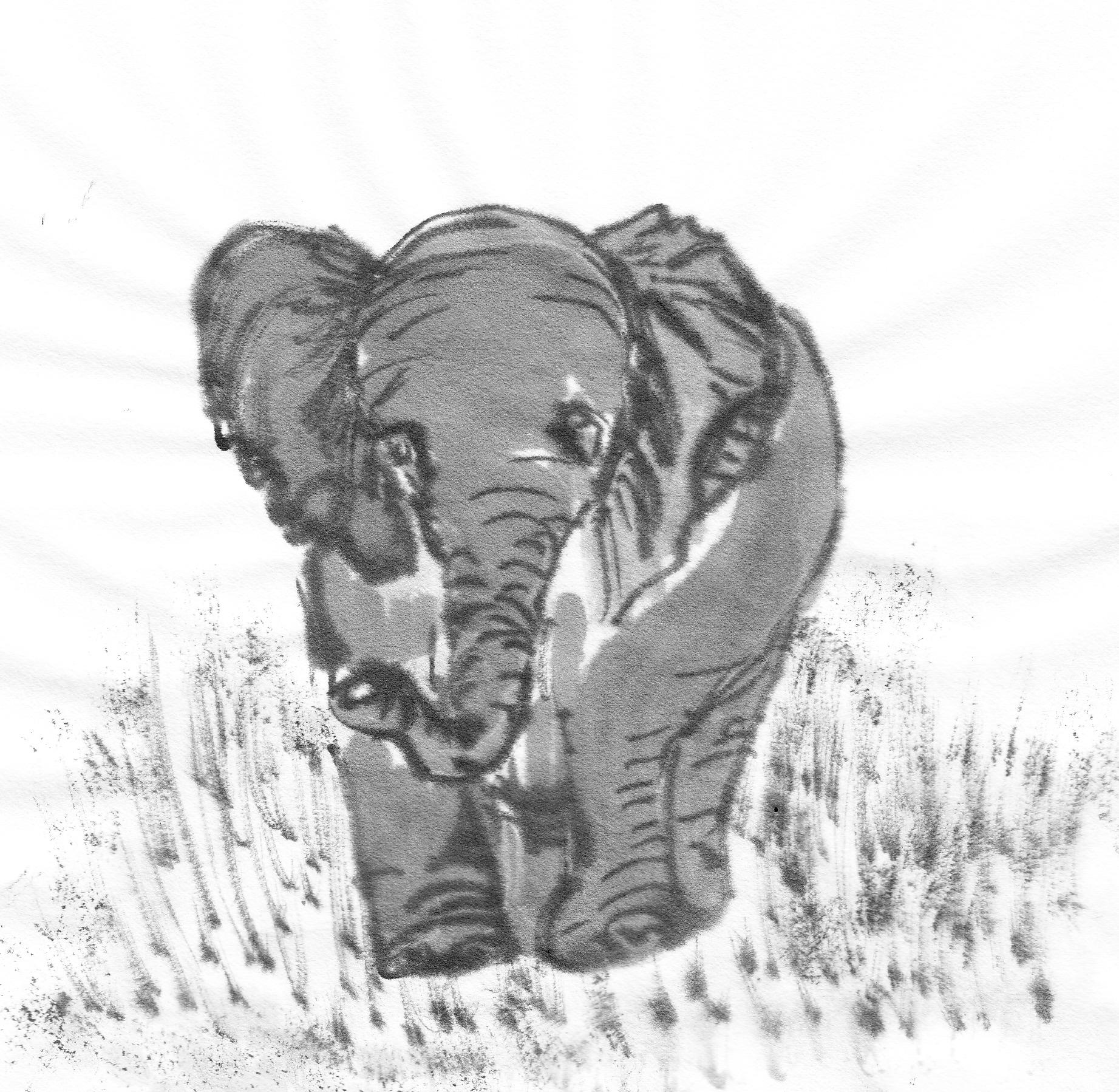 The return of ernest the elephant followmybrushmarks elephantsst0002 biocorpaavc Image collections