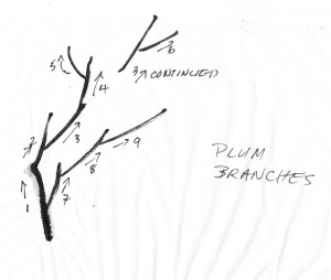 PBbranches2