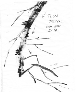 PBtrunk1