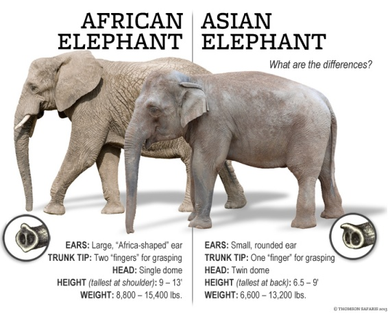 thomson-safaris-africa-elephant-difference