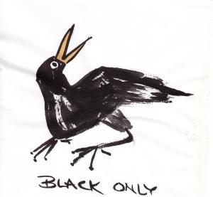 birdfeathersBL