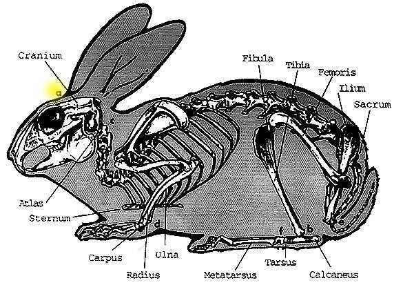 rabbitcooking