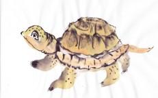 turtlestudy_0001