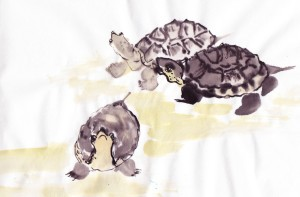 turtlestudy_0003