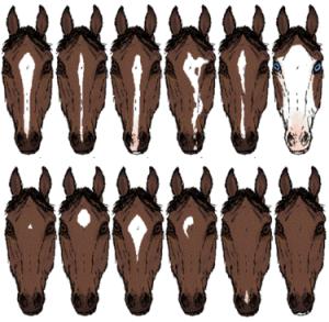 375px-HorseFaceMarkings2