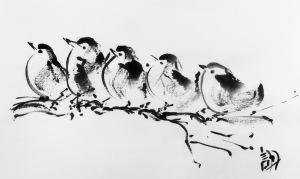 TBPbirds