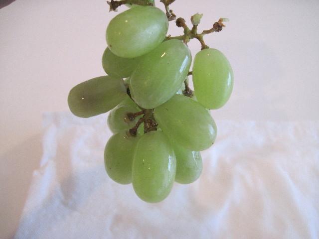 whitegrapelites
