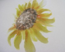 sunfbrowncen3