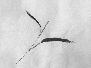birdwingsboo