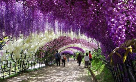 ashikaga-flower-park-12831516