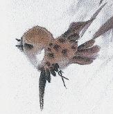 SparrowPlump