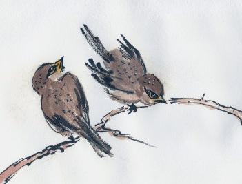 SparrowStudyRB