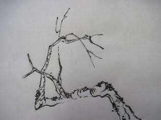 BranchMeth51