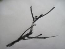BranchPat2
