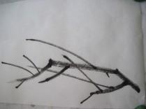 BranchPat23