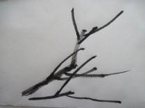 BranchPat3