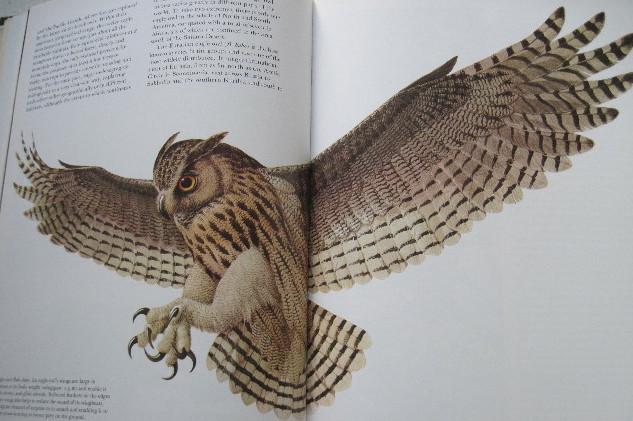 flyingOwl