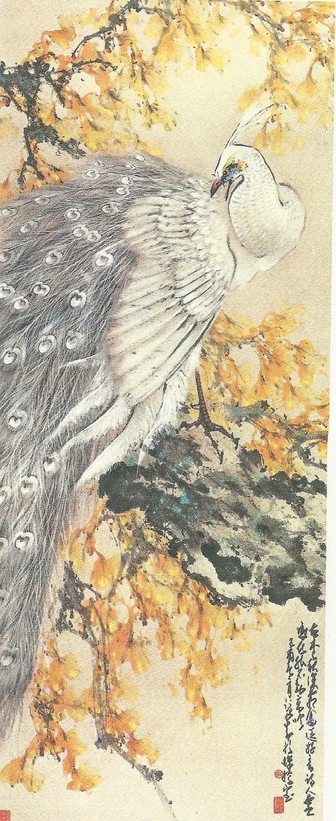 GinkoPeacock