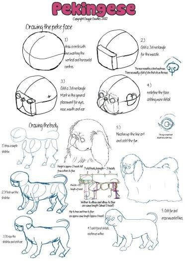 pekingese_breed_guide___part_2_by_doggiedoodles-d4ncink