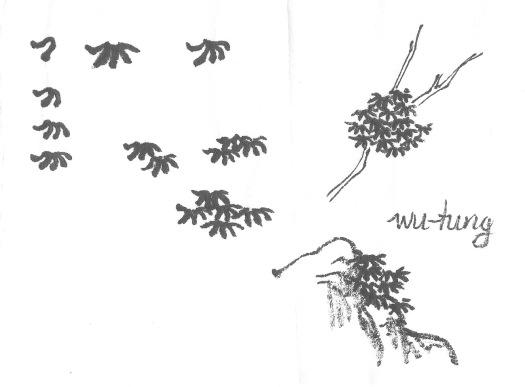 WuntungStudy