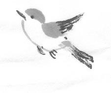 ChowBirdD 4