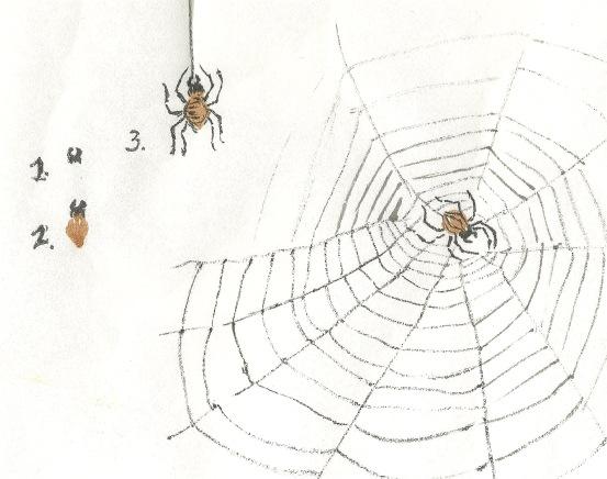 SpiderSteps