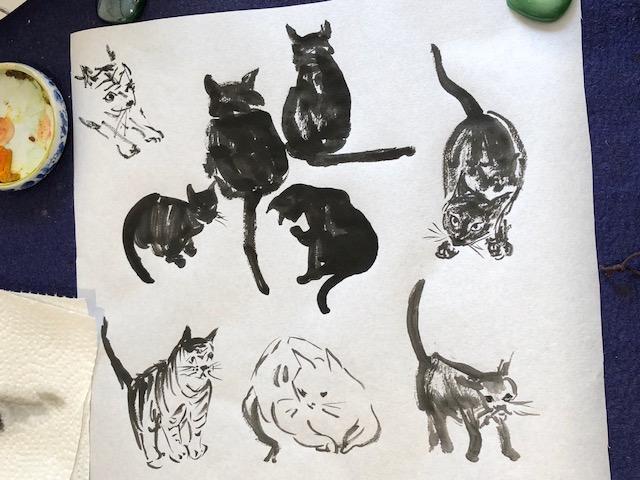 Catplay