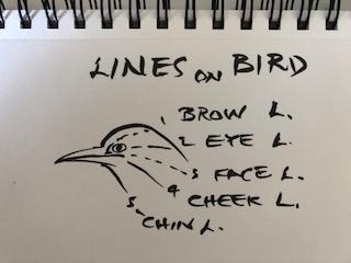 BirdLInes